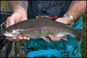 "A Fishy Story  ""The River that was Polluted by 60,000 Rainbow Trout"".  An Anglers Dream, Fishing Nightmare or Pollution ?"