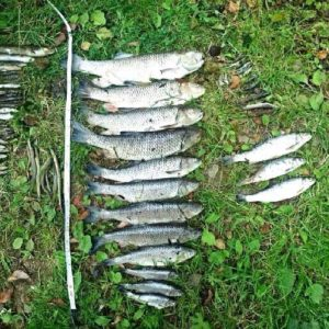 Up to 21,000 fish killed by last summer's pollution of the Leadon