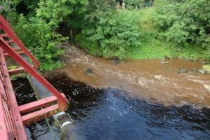 River Ayr fishermen left furious after herd of cows caused pollution blight with problems running for miles