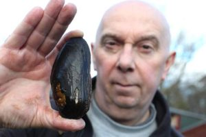 Hatchery takes major step towards reviving UK's mollusc population