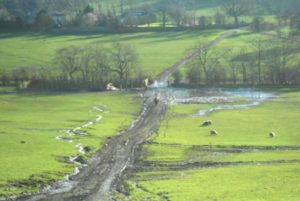 Harewood farmer fined for polluting stream